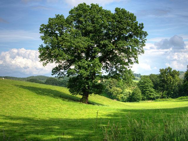 Baumpflege Garten- und Landschaftsbau Donaustauf